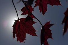 против предпосылки голубые облака field wispy неба природы зеленого цвета травы белое Стоковая Фотография RF