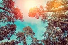 против предпосылки голубые облака field wispy неба природы зеленого цвета травы белое Стоковое фото RF