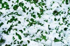 против предпосылки голубые облака field wispy неба природы зеленого цвета травы белое Первый снег на зеленой траве, взгляд сверху Стоковая Фотография