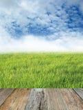 против предпосылки голубые облака field wispy неба природы зеленого цвета травы белое Стоковое Изображение RF