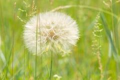 против предпосылки голубые облака field wispy неба природы зеленого цвета травы белое Стоковая Фотография
