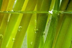 против предпосылки голубые облака field wispy неба природы зеленого цвета травы белое Стоковые Фотографии RF