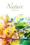 против предпосылки голубые облака field wispy неба природы зеленого цвета травы белое Мягкая хворостина дерева лист фокуса Стоковое Изображение