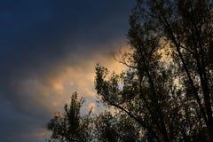 против предпосылки голубые облака field wispy неба природы зеленого цвета травы белое Стоковые Изображения RF