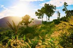 против предпосылки голубые облака field wispy неба природы зеленого цвета травы белое Ландшафт зеленых холмов пейзаж Таиланд, Стоковые Фото