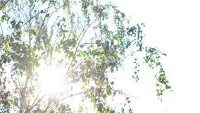 против предпосылки голубые облака field wispy неба природы зеленого цвета травы белое акции видеоматериалы