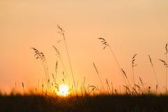 против предпосылки голубые облака field wispy неба природы зеленого цвета травы белое Заход солнца, силуэт солнца через траву луг Стоковые Изображения