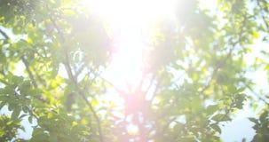 против солнца утра листьев акции видеоматериалы