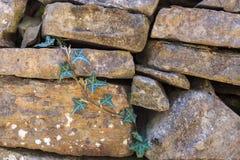 против стены плюща каменной Стоковое Фото