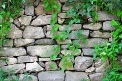 против стены плюща каменной Стоковая Фотография RF
