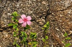 против утеса цветка предпосылки грубого Стоковое Изображение