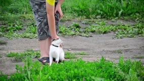 Протирки сиамского кота против предназначенных для подростков ног мальчиков видеоматериал
