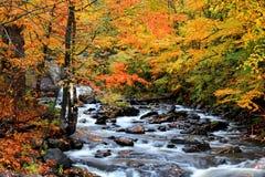 Проточная вода через деревья осени стоковые фотографии rf