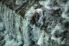 проточная вода Стоковое Фото