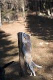 Протягивать собаку Стоковая Фотография RF