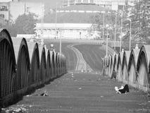 Проутюживите мост Стоковые Изображения