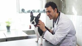 Профессиональный ветеринар усмехаясь к камере petting щенок терьера Бостона стоковое фото