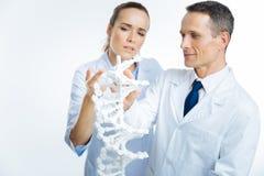 Профессиональный доктор смотря модель дна Стоковое Изображение RF