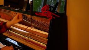 Профессиональный техник рояля играя ключи и настраивая строки с инструментом сток-видео