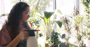 Профессиональный флорист брызгая зеленый в горшке завод с водой наслаждаясь работой видеоматериал
