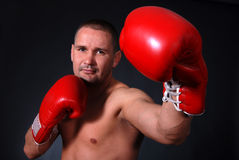 профессионал боксера стоковое фото rf