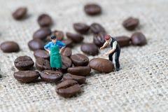 Профессионал кофе или концепция экспертизы, миниатюрное положение работника figurine людей с зажаренными в духовке кофейными зерн стоковое изображение rf