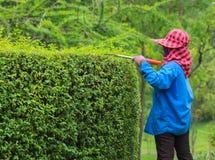 Профессиональный садовник подрезая изгородь Стоковое фото RF