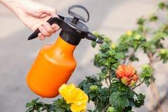 Профессиональный старший садовник мочит цветок Стоковая Фотография RF