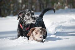 профили собаки стоковая фотография