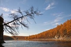 Профиль древесины лиственницы над рекой в небе Стоковое фото RF