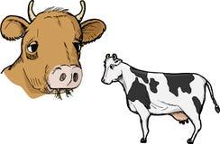 профиль коровы Стоковая Фотография RF