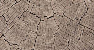 Профиль, котор подвергли действию кец ствола дерева Стоковая Фотография RF
