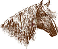 профиль лошади Стоковое фото RF