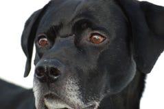профиль собаки Стоковое Фото