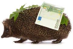 профит hedgehog евро Стоковое Изображение RF