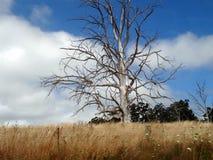 Профиль дерева с голубым небом Стоковое Изображение