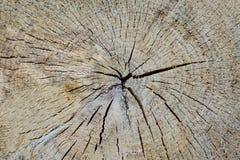 Профиль дерева Стоковые Изображения
