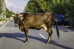 Профиль коровы Стоковые Фотографии RF