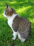 Профиль кота Стоковое Изображение RF