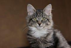 Профиль котенка Стоковое Изображение