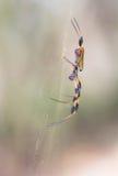 Профиль паука стоковое фото rf