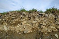 Профиль почвы Стоковое Изображение RF
