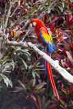 Профиль птицы ары полнометражный бортовой пока садить на насест в дереве Стоковые Фото
