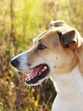 Профиль собаки (127) Стоковые Изображения