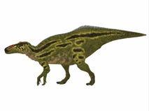 Профиль стороны динозавра Shantungosaurus Стоковые Изображения RF