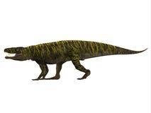 Профиль стороны Batrachotomus Стоковые Фотографии RF