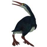 Профиль Hesperornis на белизне Стоковая Фотография