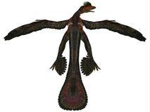 Профиль Microraptor на белизне Стоковая Фотография RF