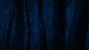 Проходить стволы дерева в темном лесе видеоматериал