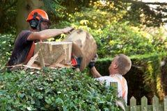 Проходящ ломтик ствола дерева из рук в руки Стоковые Фото